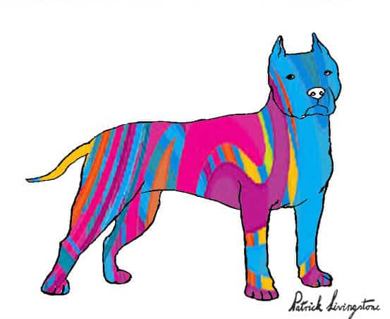 Pitbull terrier drawing colored s