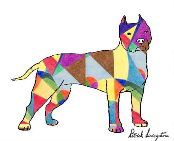 Pitbull terrier drawing colored t