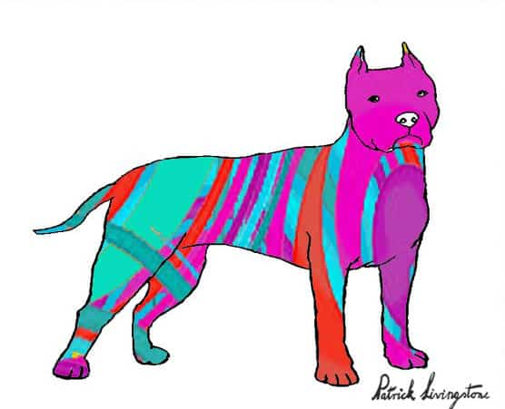 Pitbull terrier drawing colored x