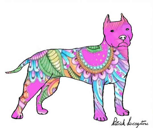 Pitbull terrier drawing colored z