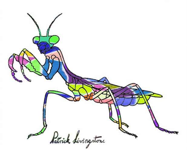 Praying Mantis drawing colored