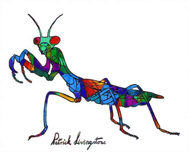 Praying Mantis drawing colored .qjpg