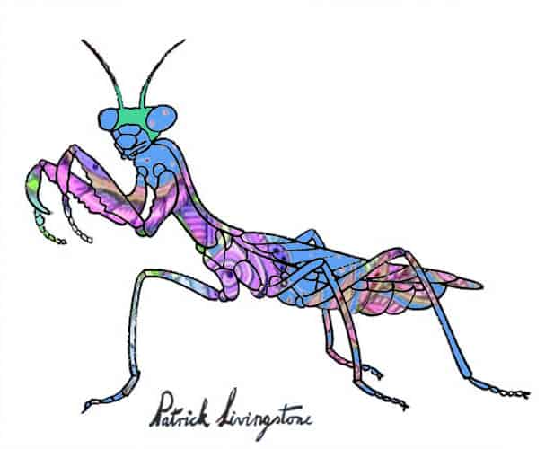 Praying Mantis drawing colored a