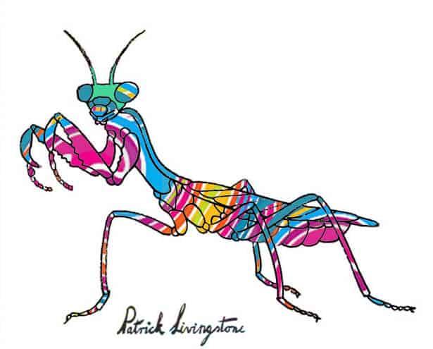 Praying Mantis drawing colored d