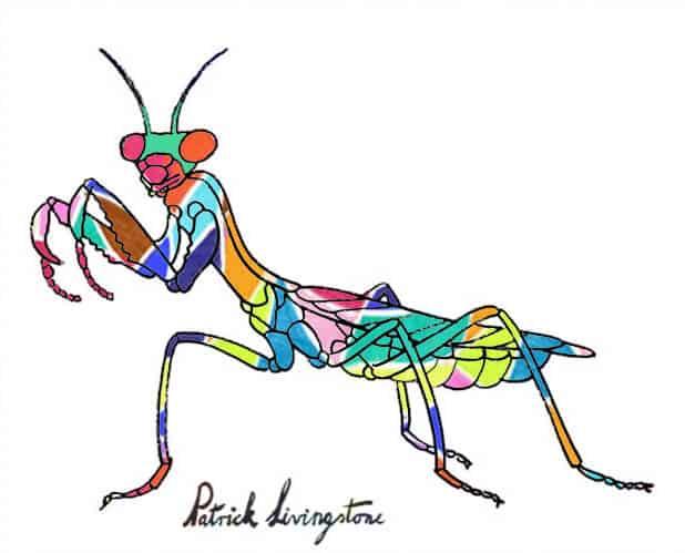 Praying Mantis drawing colored e