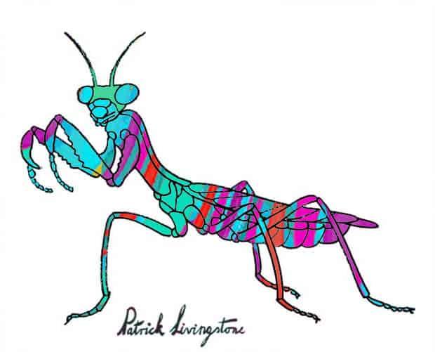 Praying Mantis drawing colored f