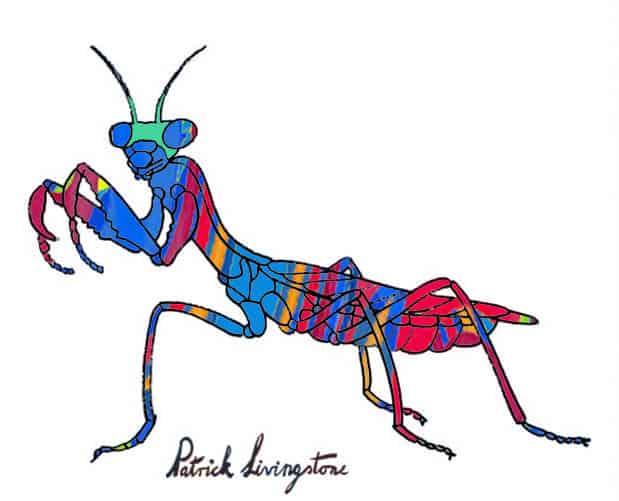 Praying Mantis drawing colored g