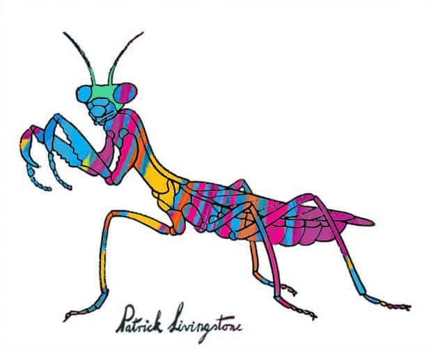 Praying Mantis drawing colored h