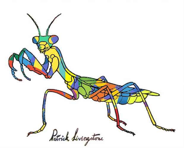 Praying Mantis drawing colored i