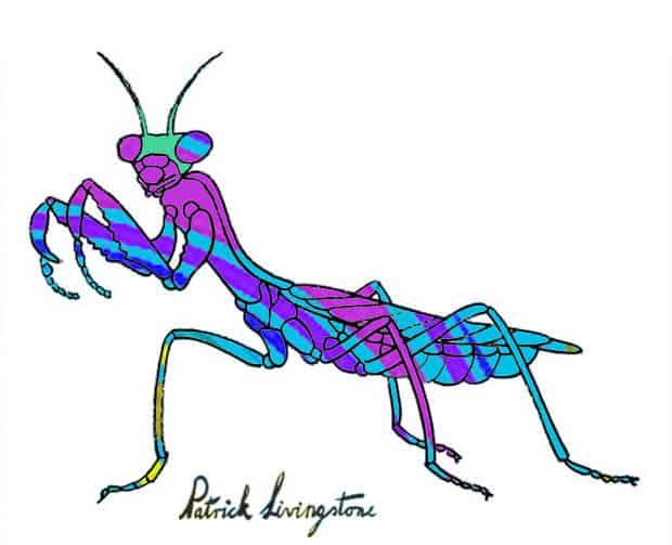 Praying Mantis drawing colored j