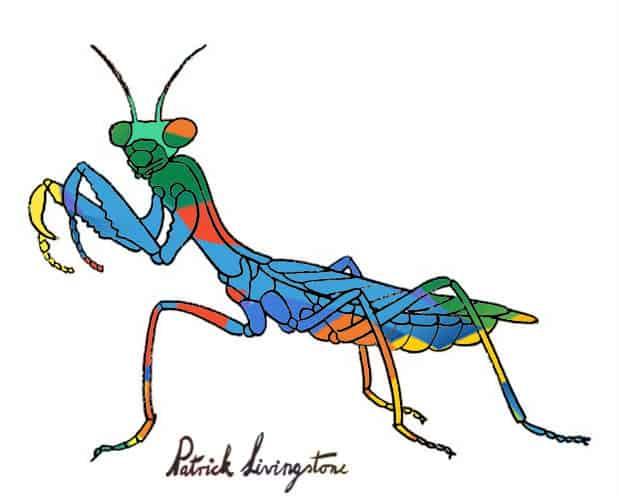 Praying Mantis drawing colored r