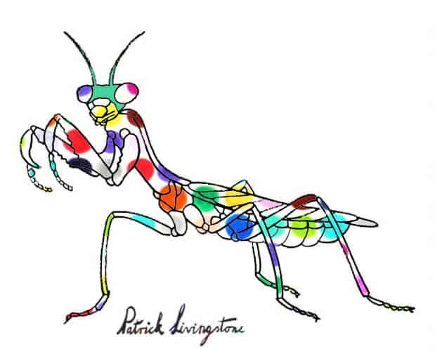Praying Mantis drawing colored s