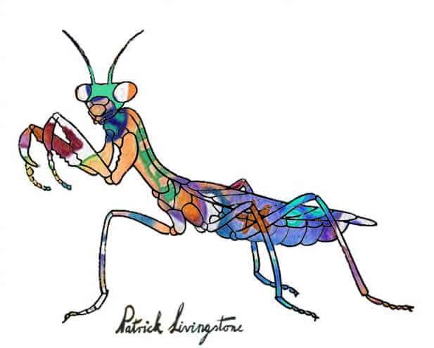 Praying Mantis drawing colored t