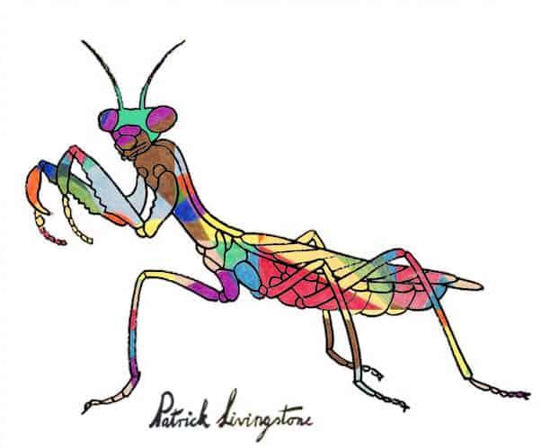 Praying Mantis drawing colored u
