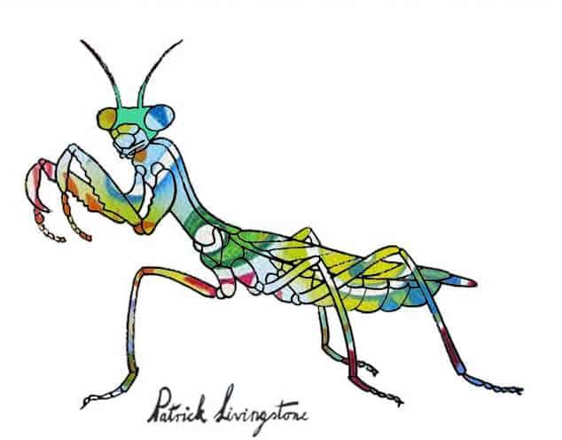 Praying Mantis drawing colored y
