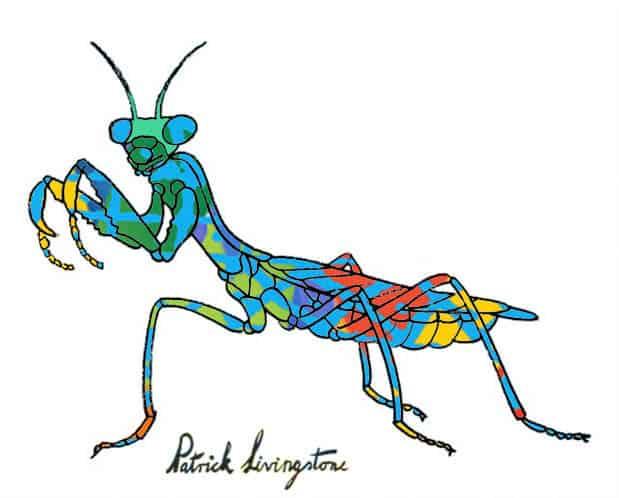 Praying Mantis drawing colored z