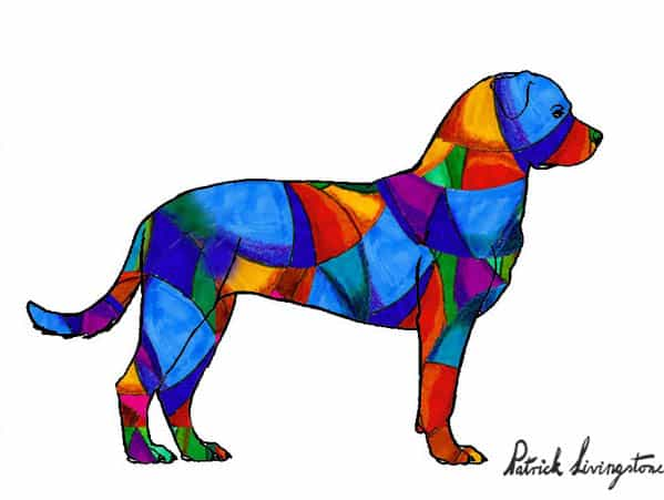 Rottweiler drawing colored s